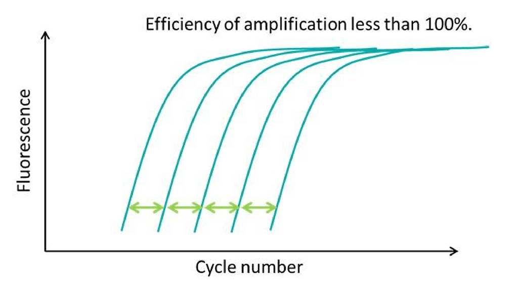 amplification efficiency