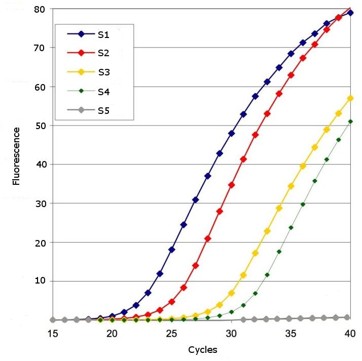Amplification plot